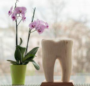 Zahnarzt Dresden Richard Vetters - Skulptur Zahn Blumen